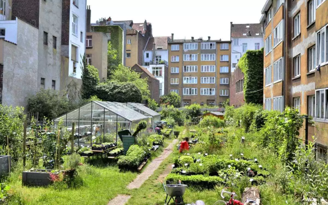 Will urban farming save our cities? Perspectives from Detroit and Brussels